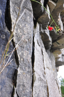 Some cool berries and rock
