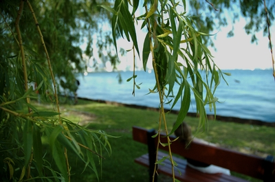Random artsy shot through the willow tree while waiting for a ferry boat
