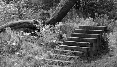 Stairs to nowhere in High Park